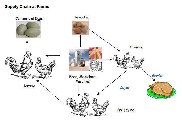 Poultry Management Software